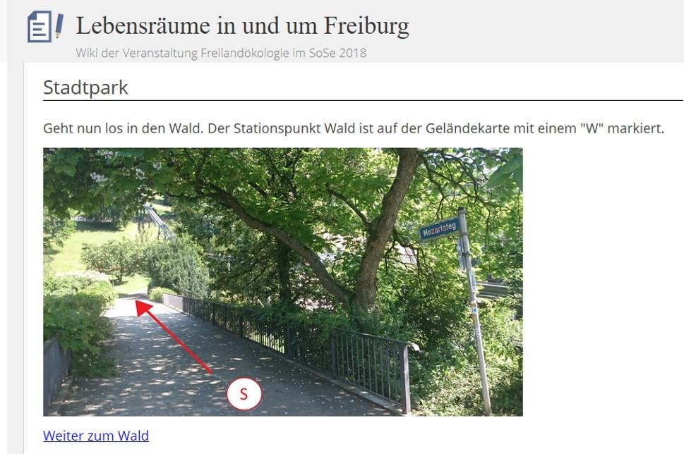 Screenshot aus der Wiki-Anleitung zur Stadtparkexkursion (Das Bild wurde durch die Konzeptionsgruppe der Exkursion aufgenommen und bearbeitet.)