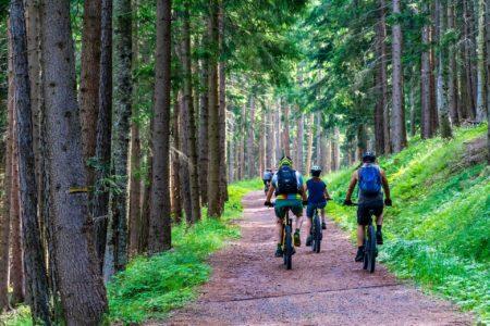 Fahrradtour mit E-Bikes im Wald